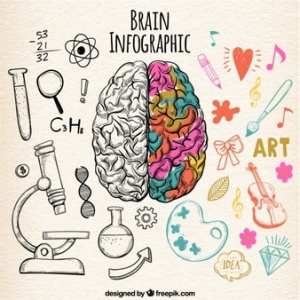 infografia-de-cerebro-humano-fantastica-con-detalles-de-color_23-2147594522