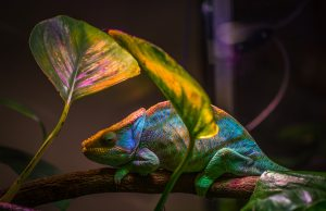 animal-beautiful-bright-751689