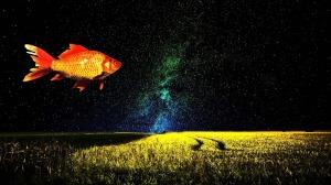 goldfish-1229772_1280